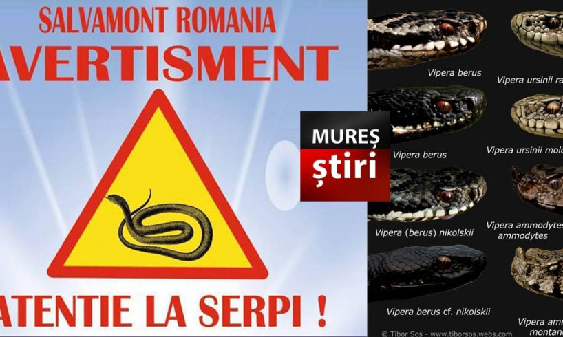 atentie-la-serpi,-a-inceput-sezonul!-salvamontistii-explica-cum-sa-va-protejati,-dar-si-primele-masuri-necesare