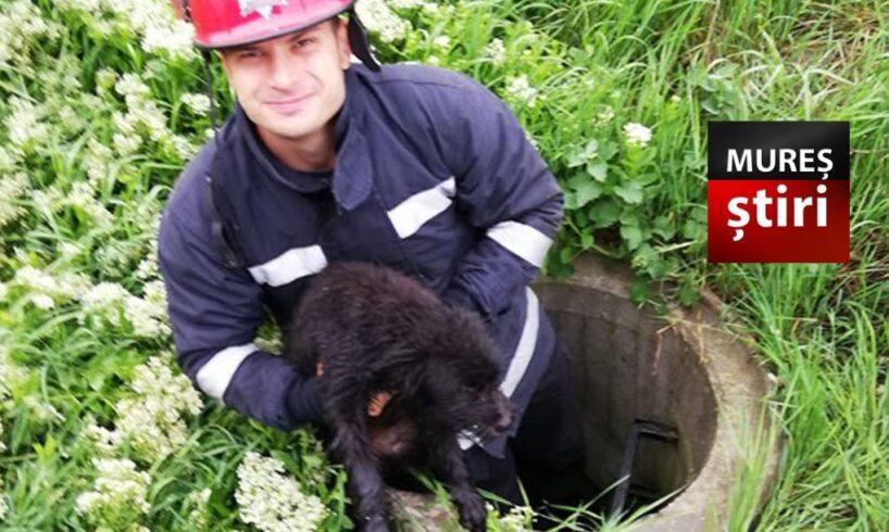 foto.-un-sufletel-a-fost-salvat-astazi-de-pompierii-mureseni!-respect