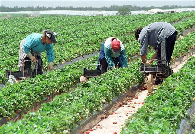 muncitorii in agricultura continua sa fie printre cei mai cautati de angajatorii din afara tarii