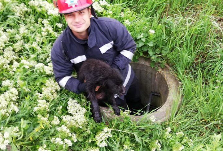 un-catel-cazut-intr-un-canal-a-fost-salvat-de-pompierii-mureseni