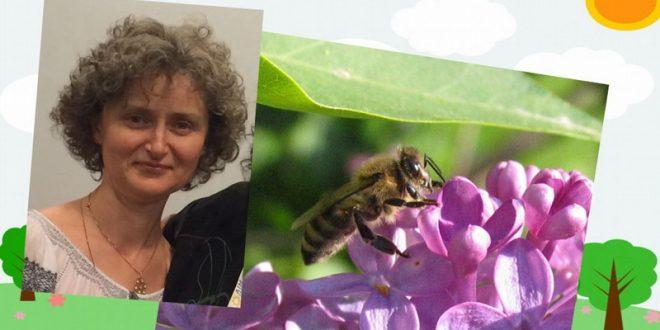 seminar-apiterapie-altfel.-nutrimente-si-ingrijiri-princiare-de-la-albine