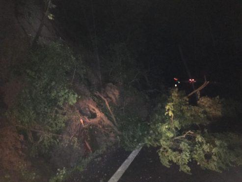 copac cazut pe carosabil la brancovenesti