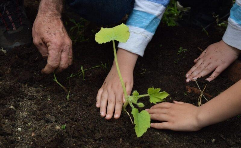peste 600 de mii de puieti vor fi plantati in judetul harghita