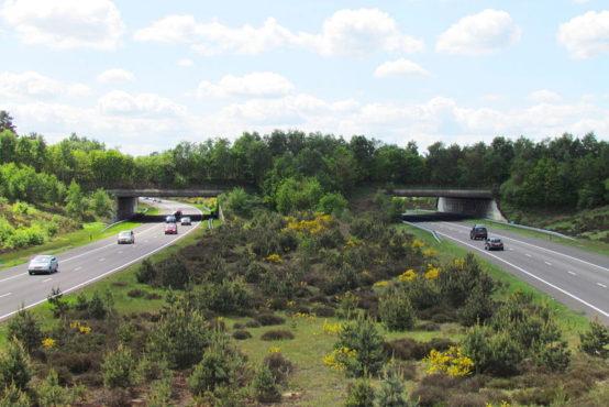 plan-de-actiune-pentru-coridoare-ecologice-in-mures