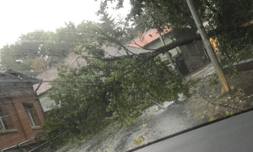 copac-cazut-pe-bulevardul-1-decembrie-1918