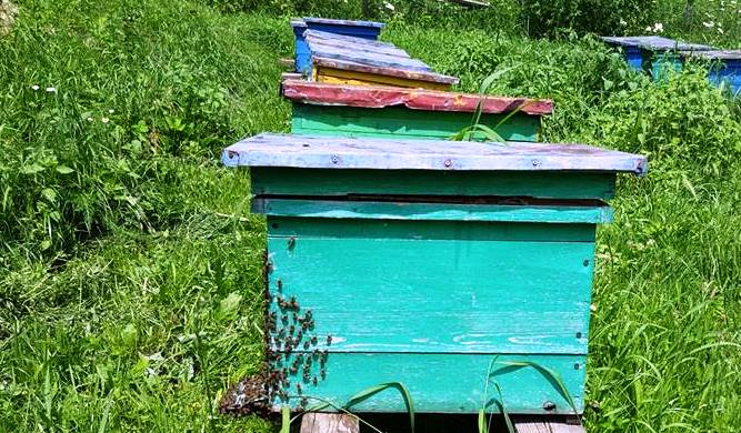 romania si slovenia indicarea precisa a tarii de origine a mierii