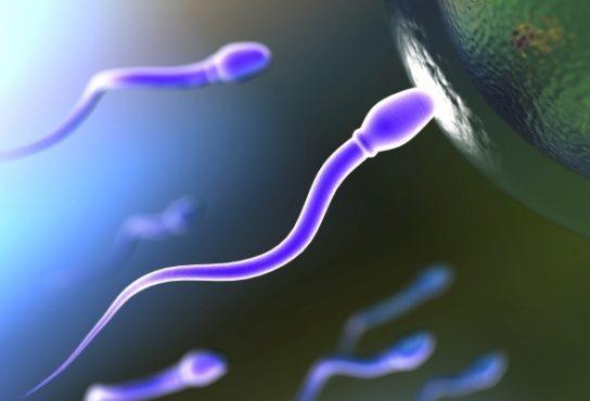 primaria-targu-mures-a-dat-o-pe-fertilitate