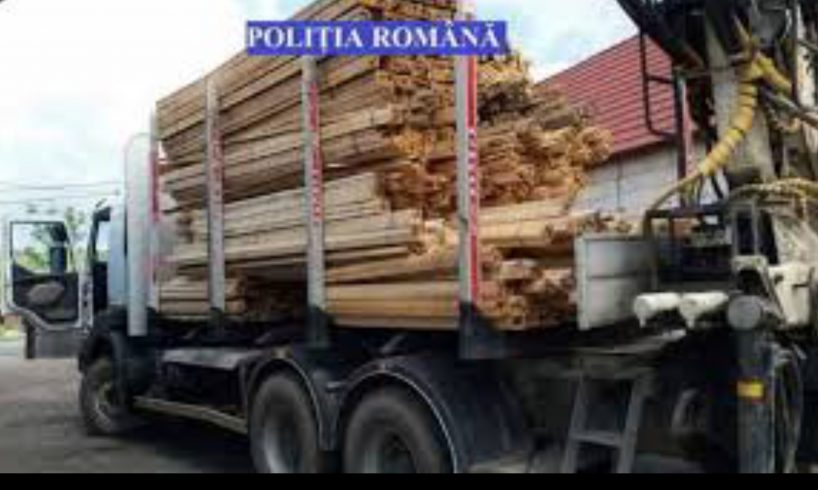 politia-o-firma-din-tirgu-mures-s-a-ales-cu-lemnul-confiscat-si-o-amenda-de-1.000-de-euro!