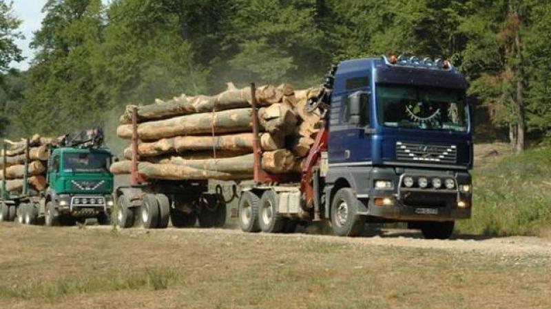 actiune-a-politistilor-mureseni:-lemn-confiscat,-in-valoatre-de-peste-1.000-de-euro
