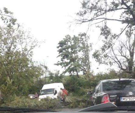 copaci doborati in judet accident la ludus