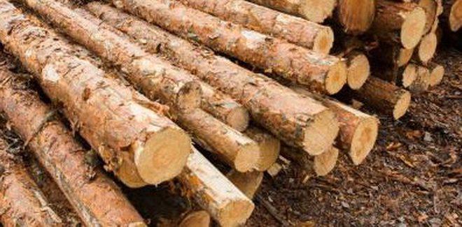 material-lemnos-confiscat-de-la-un-barbat-din-hodac