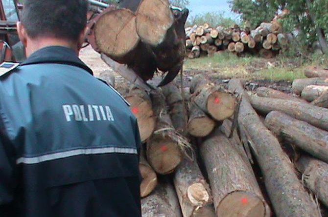 24-de-metri-cubi-de-lemn,-confiscati-la-hodac