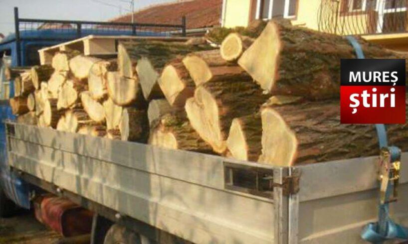 atentie a mai fost prins un muresean care transporta ilegal material lemnos