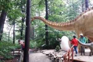 invitatie la dino parc rasnov