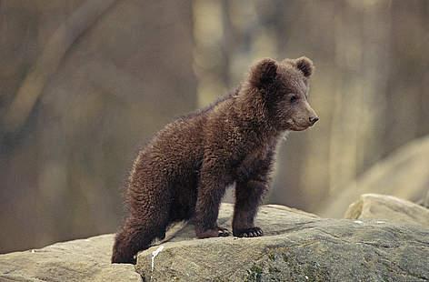 mai multi indivizi din judetul brasov filmati in timp ce chinuaiu un pui de urs