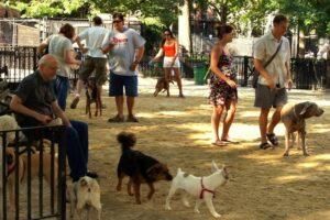 primul-parc-pentru-animalele-de-companie-in-fagaras