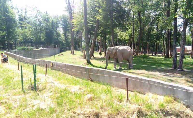 un elefant si o maimuta bunicii gradinii zoologice tirgu mures