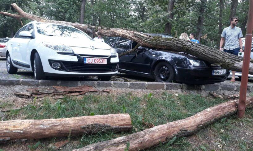 foto un copac a cazut peste doua masini in parcarea de la platoul cornesti