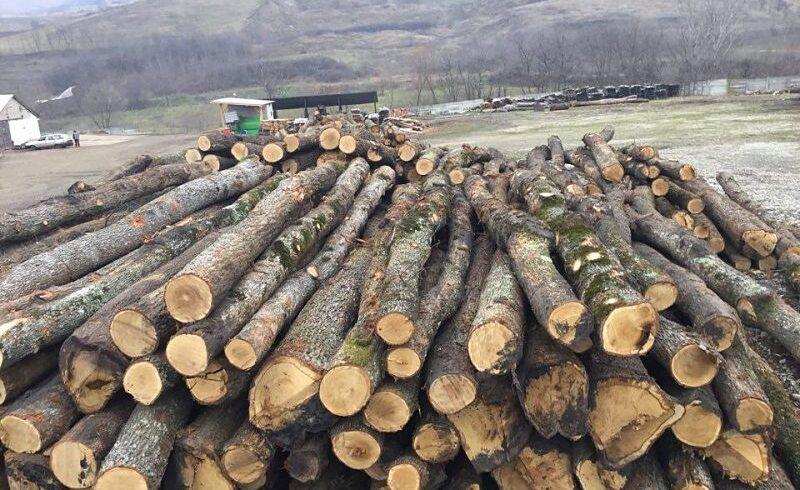 confiscari-record-de-material-lemnos-la-solovastru-si-hodac