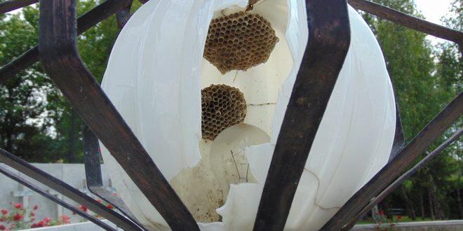 parcul eroilor din targu mures cuib pentru viespi