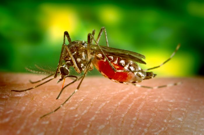 primul caz de infectie cu virusul west nile confirmat la galati