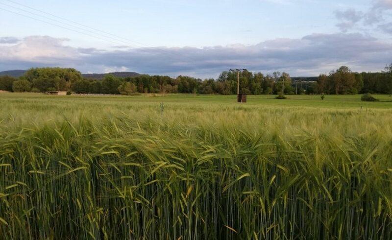 vremea-din-ultima-saptamana,-benefica-pentru-agricultura-mureseana