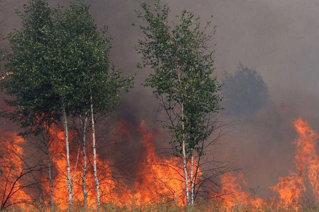 peste 7 hectare de padure au ars in acest an in judetul mures din cauza focului lasat nesupravegheat