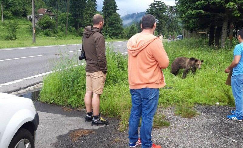 amezi-pentru-cei-care-hranesc-ursii