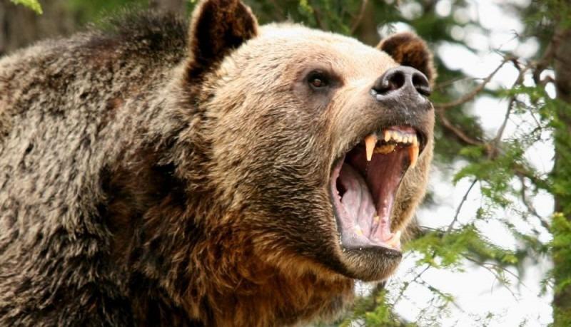 autoritatile harghitene cer ministrului mediului sa si asume responsabilitatea pentru nenumaratele atacuri ale ursilor