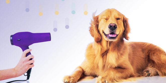 invatati-secretele-toaletajului-canin-la-un-nou-workshop-in-targu-mures
