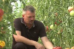 un preot din mures si a transformat pasiunea pentru agricultura intr o afacere de succes