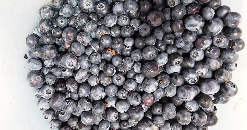 40-de-tone-de-fructe-de-padure-culese-in-mures-vor-ajunge-la-export
