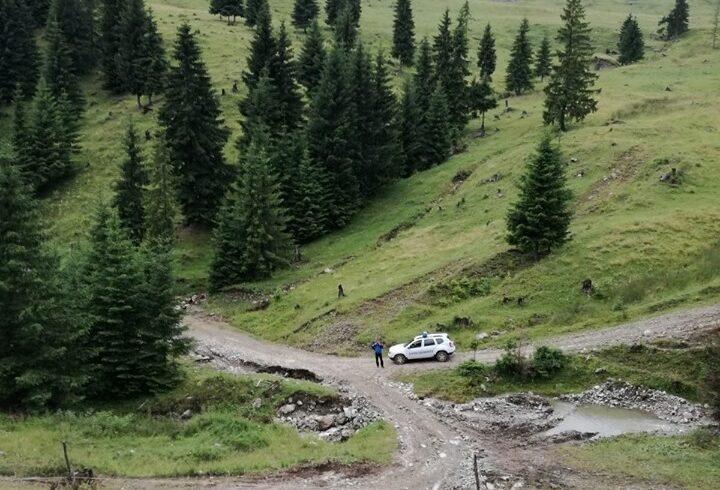 harghitean ratacit in zona montana gasit de jandarmi