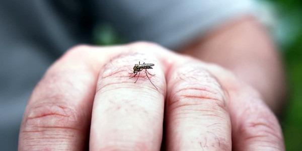 sapte cazuri de infectie cu virusul west nile