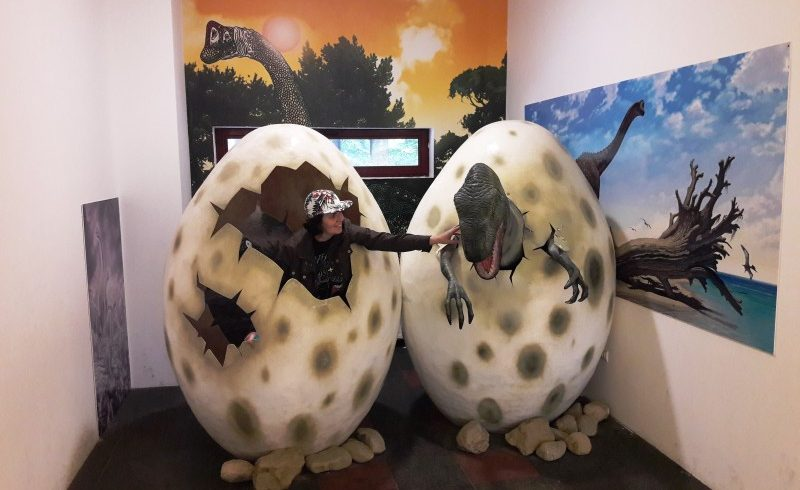 expozitie de cuiburi de oua de dinozaur la dino parc rasnov