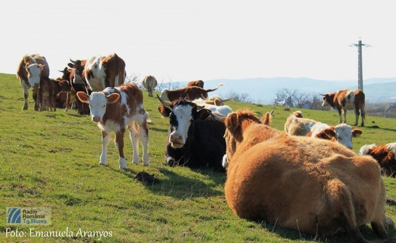 masuri specifice protejarii animalelor in perioadele caniculare