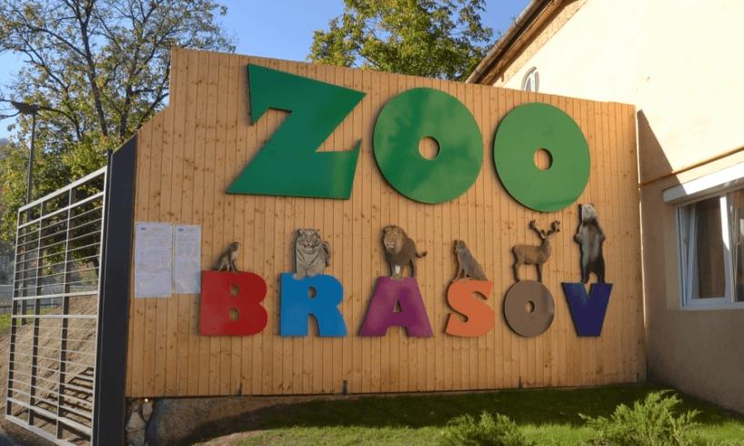 in-curand,-la-zoo-brasov-vor-incepe-lucrarile-pentru-casa-pinguinilor-si-focilor