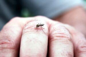aproape-100-de-oameni-au-fost-infectati-in-grecia-cu-virusul-west-nile