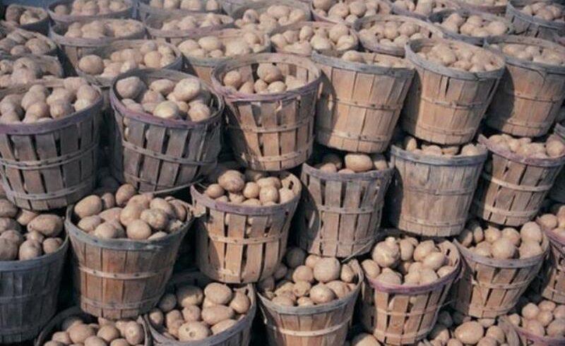 productii mai mari de grau si cartofi in covasna