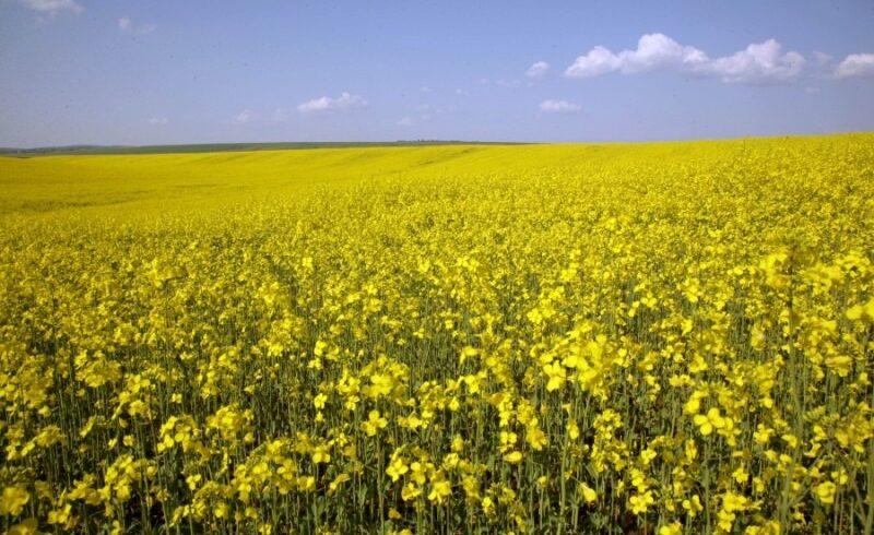 mii de hectare de culturi ar putea fi afectate dupa ce ue a interzis o serie de pesticide pentru seminte