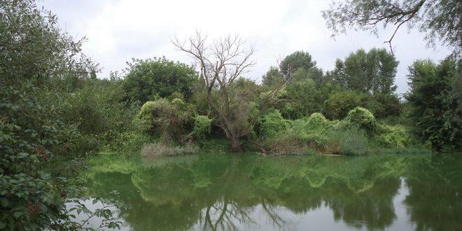 activitati de pescuit pe bratul mort reglementate la ludus