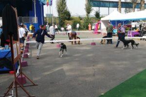continua-duminica-cele-2-expozitii-internationale-canine-de-la-tg.mures