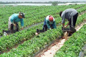 criza-cronica-a-fortei-de-munca-in-agricultura