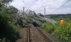 circulatia-trenurilor-intrerupta-in-judetul-mures,-din-cauza-unui-copac-cazut!