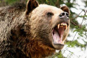 barbat ucis de urs in judetul mures