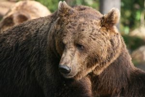 ursul-a-intrat-azi-noapte-in-gospodaria-unei-femei-din-simonesti,-harghita