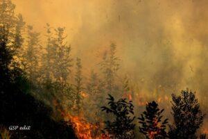 incendiu-de-padure-in-zona-valea-morii-din-sibiu