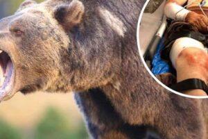 mures:-zeci-de-cereri-pentru-extragerea-ursilor-agresivi!