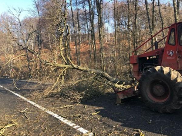 copacii doborati de vant au creat probleme la predeal