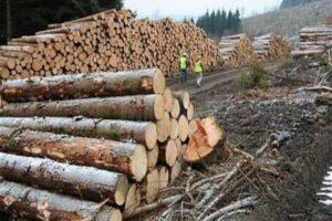 actiune-in-forta-a-politistilor-mureseni:-lemn-confiscat,-amenzi-si-dosare-penale